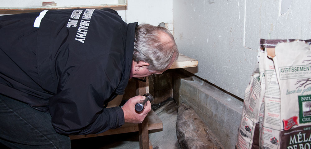 Northern Healthy Homes basement Mold Inspection